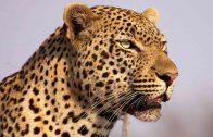 Süd-Afrika – Die vergessensten Tiere der Welt – Doku 2017