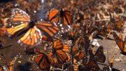 Superwunder der Natur – Doku Tiere HD