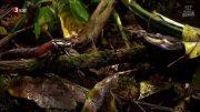 Täuschen und Tarnen – Über Lebenskünstler der Natur Doku HD