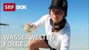 Tauchen in Indonesien, auf den Seychellen, in Grönland & der Schweiz | Wasserwelten (2/4) | SRF DOK
