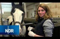 Tierärzte im Notdienst: Rund um die Uhr im Einsatz für tierische Patienten | die nordreportage | NDR