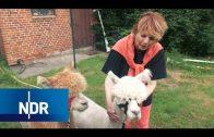 Tierschutz: Viel Herz für Vierbeiner aus Rumänien | die nordstory | NDR