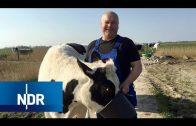 Tierschutz: Zweites Leben für Nutztiere | NaturNah | NDR Doku