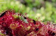 Tödliche Pflanzen und ihre Tricks Doku