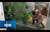 Quartier für Pflanzen: Silkes Winter-Gärtnerei   Typisch!   NDR Doku