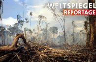Umweltschutz mit dem Maschinengewehr   Weltspiegel Reportage