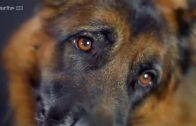 «Universum Hund» – (Der Hund – Unserem besten Freund auf der Spur Doku 2015) | arte