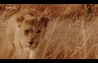 Vertraute Feinde: Elefanten und Löwen am Chobe-Fluss Doku (2008)