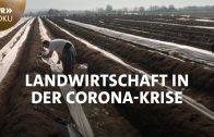 Spargelernte ohne Helfer aus Rumänien?  Landwirtschaft in der Corona-Krise | SWR Doku