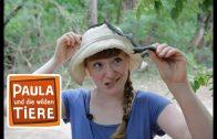 Vorsicht, Schlange!    Reportage für Kinder   Paula und die wilden Tiere
