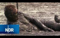 Watt! Sand, Schlick und Meer | die nordstory | NDR Doku