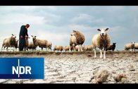 Wetter extrem – Hitzewellen und Wassermassen (2/3) | DIE REPORTAGE | NDR Doku