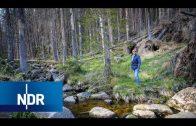 Wetter extrem – Zwischen Sturmflut und Dürre (1/3) | DIE REPORTAGE | NDR Doku