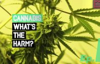 What's the Harm – Cannabis Doku – Ep.1