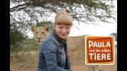 Wie die Löwen leben   | Reportage für Kinder | Paula und die wilden Tiere