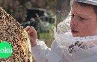 Wir retten die Bienen! Hobby-Imker und Profis zeigen ihre Arbeit | WDR Doku