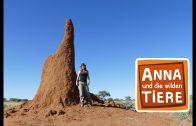 Im Reich der Termiten  | Reportage für Kinder | Anna und die wilden Tiere
