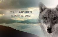 Wilde Karpaten – Im Reich der Wölfe