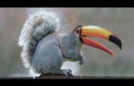 Wunder der Evolution – Entwicklung der Tierarten Doku 2015 *HD*