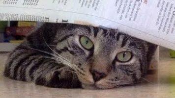 Xenius: Katzen – intelligent und gefährlich