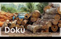 Umweltschutz mit dem Maschinengewehr   Doku