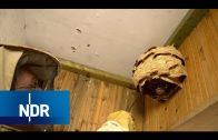 Keine Angst vor Wespen | NaturNah | NDR Doku