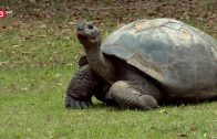 3Sat Doku – Helden der Evolution(1/3) – Schildkröten