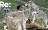 Wolfshunde: treue Gefährten oder gefährliche Haustiere? | ARTE Re:
